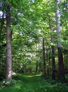 the_chase_wood_-_newbury