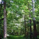 Los misterios de la abadía II. Los moradores del bosque.
