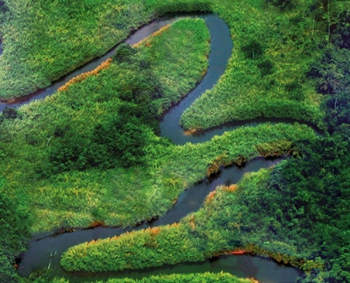 La bruma verde, de Gonzalo Giner